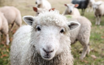 Loan Scheme for Scotland's Farmers and Crofters